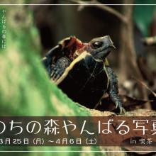 いのちの森 やんばる写真展/@喫茶 やさい畑